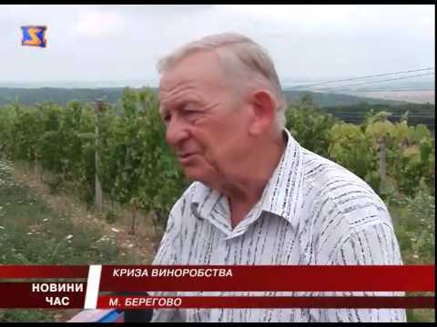 Криза  виноробства. Закарпатські винороби страждають від дорогих ліцензій