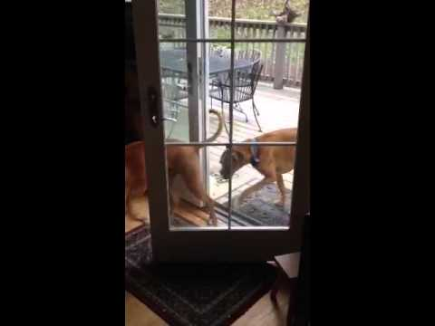 Smartest dogs in the world