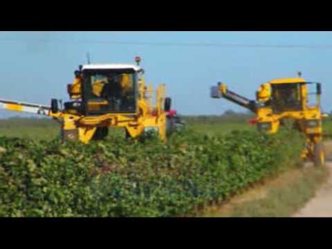 Grape Harvester | Grégoire