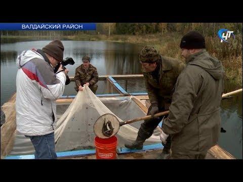 В Валдайском районе продолжается зарыбление озер