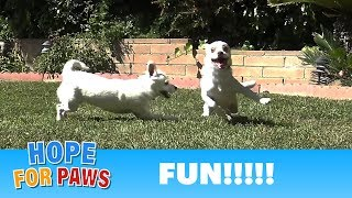Family reunion - you won't believe how these puppies grew! by Hope For Paws