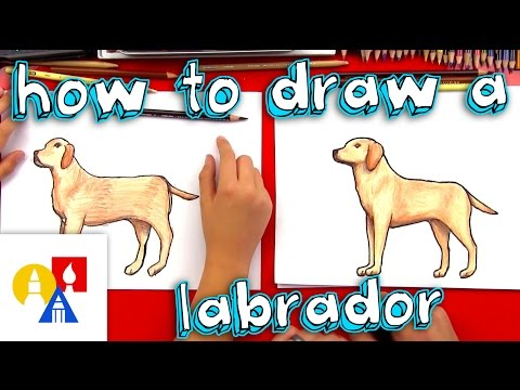 How To Draw A Yellow Labrador
