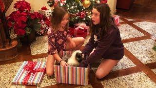 Video Christmas Puppy Surprise Compilation 2018 - 2019 [NEW] MP3, 3GP, MP4, WEBM, AVI, FLV Juni 2019