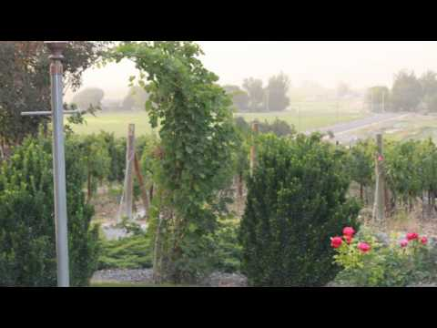 Snyder Winery Video 1.wmv