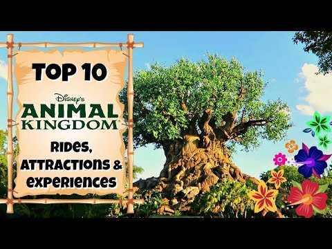 TOP 10 Animal Kingdom rides & experiences | Walt Disney World 2017