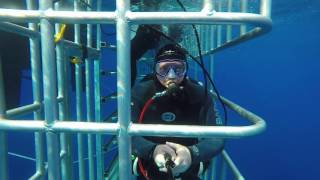 <h5>Looking into the cage from a shark's point of view</h5>