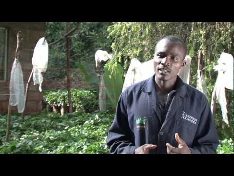 Youth in Agricultural Trade and Enterprise (YATE) - Mike's Success Story
