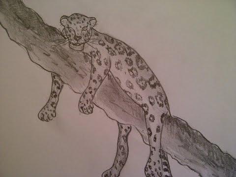 Zeichnen lernen für Anfänger.  Ein Leopard malen. Tiere (Raubtiere) Zeichnen.