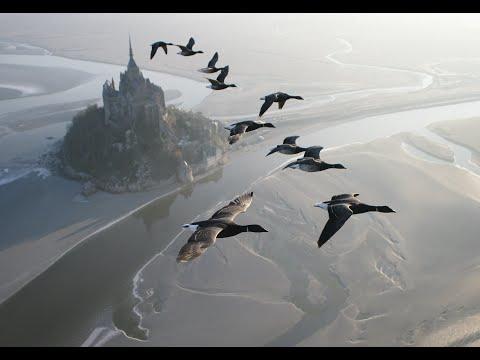 Lentelyä hanhiparven kanssa – Upea video