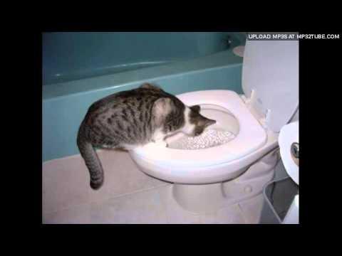 Stuart McLean – Toilet Training The Cat Part 3