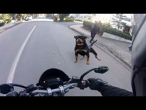 Angry Dogs Vs BIKERS 🌟 DOGS ATTACKED MOTORCYCLE [Ep #02] 🌟 BEST Compilation 2017