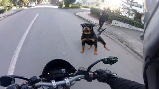 Video Angry Dogs Vs BIKERS 🌟 DOGS ATTACKED MOTORCYCLE 🌟 BEST Compilation 2017 MP3, 3GP, MP4, WEBM, AVI, FLV Mei 2017