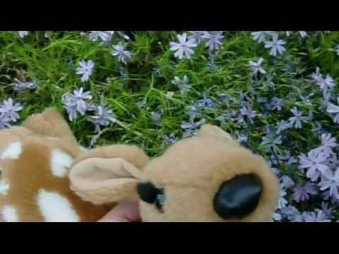 The life of a (plush toy) deer ...