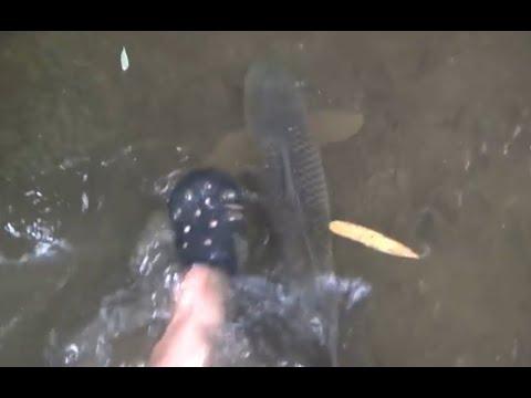 Cận cảnh cá với baba hiền như đất không ai bắt ở Nhật Bản - Thời lượng: 4 phút, 24 giây.