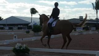 Eiren & Sammy make an impressive start