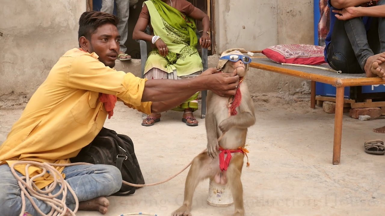 Bandar.Monkey Dance Drama in India.Comedy Bandar ka khel.कॉमेडी बन्दर का खेल मदारी.Madari.Macaque