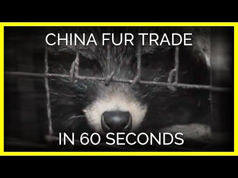 這群調查員潛入殘暴的動物皮草養殖場「驚見可怕百倍的景象」,看到動物自己咬自己你還買得下手嗎?