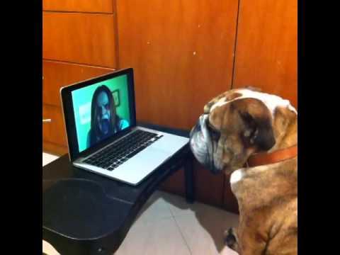 影片看一半突然跑出嚇人的鬼畫面,狗狗的反應讓我笑了XD