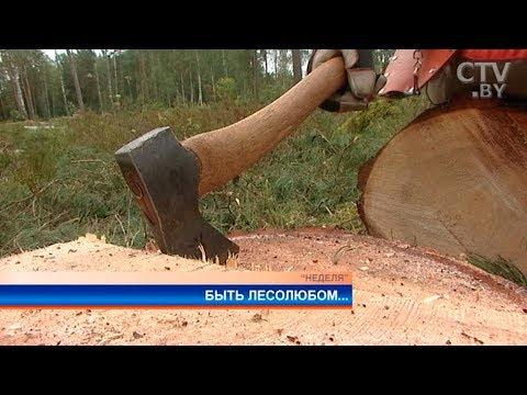«Приехали из Минска, подменят нас немножко»: как корреспондент СТВ Ольга Осадчая лес валила онлайн видео
