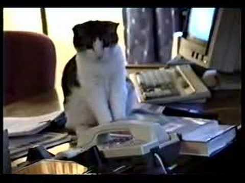 Cat Answering Service