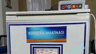 El yapımı Buzdolabından Full otomatik kuluçka makinası yclkuluçka yücel ışık www.denizlihorozu.com 5359452386 Denizli