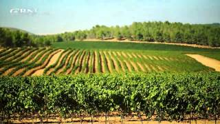 Video Made in Israel: Agriculture MP3, 3GP, MP4, WEBM, AVI, FLV Februari 2018