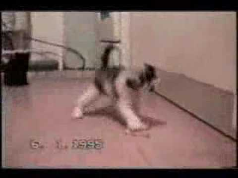 Crazy cats clip video