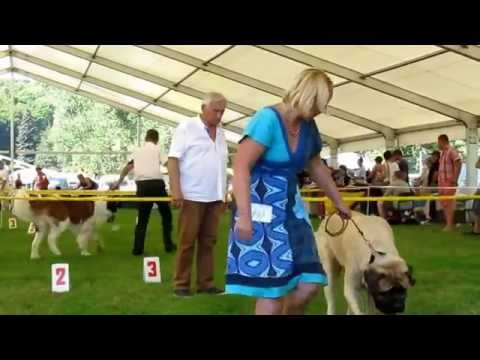 Mlada Boleslaw Czech Republic International Dog Show August 2015