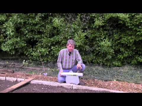 Horticultural Fleece - USING IT ON YOUR VEGETABLE BEDS
