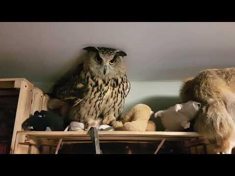 Вечерний педикюр совы, внезапный чайник и традиционное УГУ