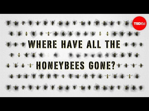 The case of the vanishing honeybees – Emma Bryce