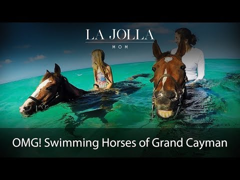 Swimming Horses of Grand Cayman
