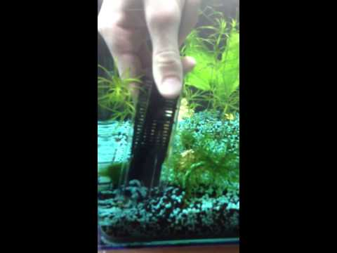 Comment nettoyer gravier d 39 aquarium la r ponse est sur for Aspirateur fond aquarium