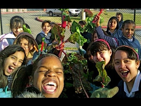 How to Start a School Garden – Help Kids Grow Healthy Food!