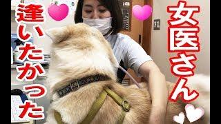 Video AkitaInu女医に恋する秋田犬・逢いたかったです#veterinary#hospital MP3, 3GP, MP4, WEBM, AVI, FLV November 2018