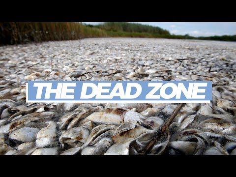 Why so many fish are dying in the Gulf of Mexico