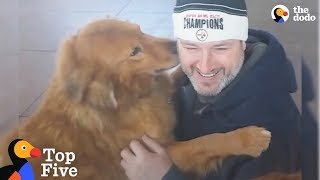 Dogs Reunited With Their Families | The Dodo Top 5 by The Dodo