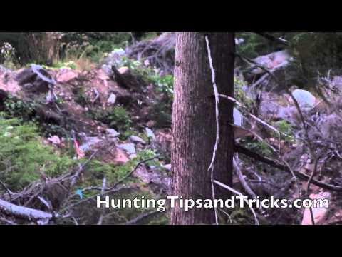 Blacktail Deer Footage 2013