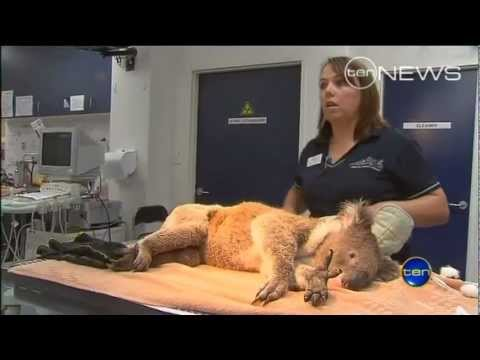 Boom Sherrin equipment used in local wildlife rescue Video Image