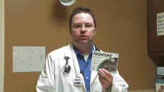 Cat Care: Fleas&Parasites : Frontline Vs. Advantage For Cats