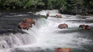 Video Brown Bears fishing at Brooks River Falls, Katmai Nat'l Pk, Alaska (HD) MP3, 3GP, MP4, WEBM, AVI, FLV Agustus 2017