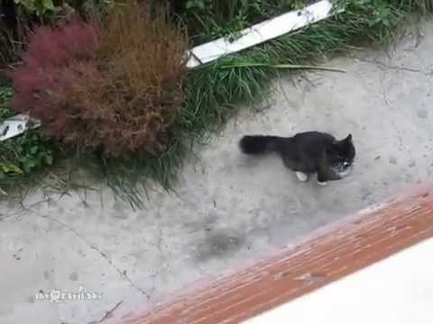 Baš razmažena mačka