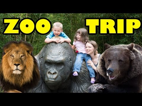 Zoo Animals - Cute Animals - Funny Animals - An Amazing Zoo Trip