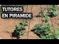Como Entutorar Plantas En Pirámide O Tipi - Tomate Pepino judía guisante || La Huertina De Toni