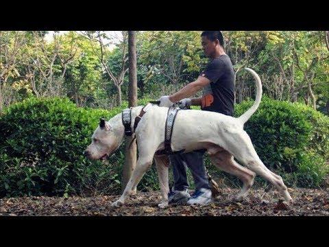 10 razze di cani sconosciuti più forti al mondo!