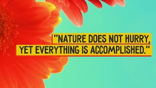 "Presenting Top Ten Beautiful Nature Quotes..............................................................Click to Subscribe - http://goo.gl/47SV9mClick to Share on Facebook - http://goo.gl/ARsvOzClick to Share on Twitter - http://goo.gl/bdfoiBClick to Share on Google Plus - http://goo.gl/D5VQBC..............................................................Follow us on Twitter - https://twitter.com/toptenamazing..............................................................Top Ten Beautiful Nature Quotes10 - ""To sit in the shade on a fine day and look upon the verdant green hills is the most perfect refreshment""09 - ""Whoever loves and understands a garden will find contentment within"" 08 - ""Forget not that the earth delights to feel your bare feet and the winds long to play with your hair"" 07 - ""Nature does not hurry, yet everything is accomplished""06 - ""I think it annoys God if you walk by the color purple in a field and don't notice""05 - ""Within nature lies the cure for humanity""04 - ""The earth laughs in flowers""03 - ""The earth has music for those who listen""02 - ""Nature is the art of God""01 - ""The Earth does not belong to us; we belong to the Earth""..............................................................Music : Title : How it BeganAlbum : YouTube Audio LibraryContributing Artists : Silent PartnerGraphic Images : www.morguefile.com.............................................................."