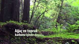 2015 Uluslararası Ormanlar Günü