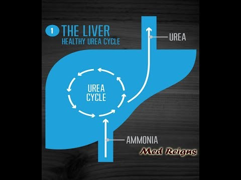 "Urea Cycle  ""Med Reigns"""