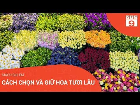 Cách chọn và giữ hoa tươi lâu hơn ngày Tết