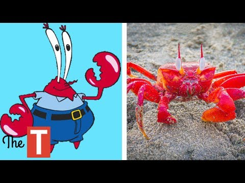 10 Spongebob Squarepants Characters In Real Life
